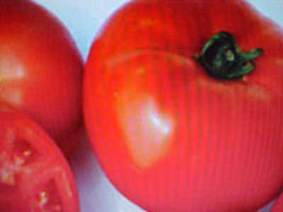 LARGE RED BEEFSTEAK VEGETABLE TOMATO SEEDS  12-16 OUNCE ()