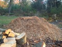 Wood chip for sale