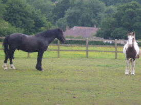 Grazing to rent near Denmead in Hampshire: 9 acres with post and rail fencing