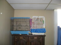 3 Parakeets two cages   w/toys