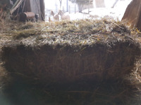 HAY for sale (excellent for horses)