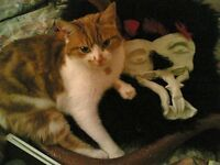 Available NOW beautiful small room in friendly Dockland houseshare. Female cat lover perfect.