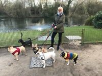 WANTED: Part-time DOG WALKERS/SITTERS: SW London: CASH IN HAND