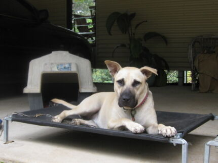 AUSTRALIAN MADE DOGS BEDS DISTRIBUTED IN FNQ.