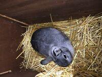 Lovely grey rabbit