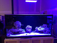 90 Gallon salt water tank with stand and sump
