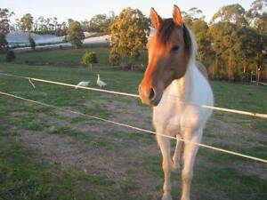 HORSE AGISTMENT - WOOLGOOLGA AREA Woolgoolga Coffs Harbour Area Preview