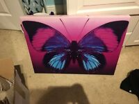 Large butterfly canvas