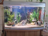 Aqua one AR850 Fish Tank