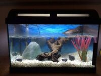 Fish Tank (Heater, Filter & Decorations Included)