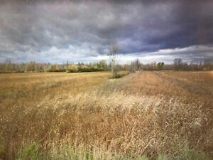 terre agricole, Ch. Bellerive, Carignan