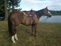 Professional Horse Training & Colt Starting
