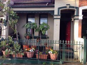 Own room in Bondi Junction house Bondi Junction Eastern Suburbs Preview