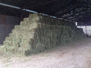 Small Square Hay Bales 4-Sale