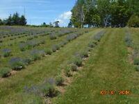 Organic Orchard Maintenance