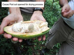 Plantation de Bois Tropicales  Cacao, Teck, Bois de Rose et +