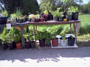 ROADSIDE PLANT STAND Hwy.2, Newtonville