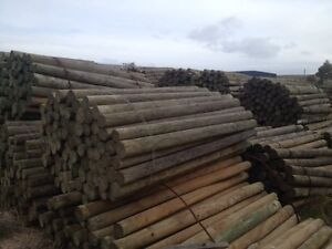 Treated pine posts fencing treated pine poles