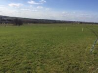 3 ACRES OF GRAZING LAND FOR RENT