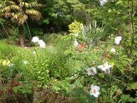 Genus gardens, East Sussex, Design, Planting and Maintenance. RHS Qualified
