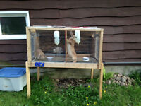 Rabbits and Cage for Sale