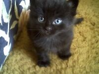 WONDERFULL BLACK KITTENS