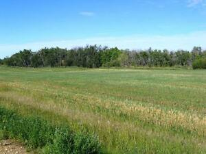 116 Acres Near Camrose Edmonton Edmonton Area image 4