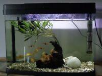 Fish Tank 40 litre size