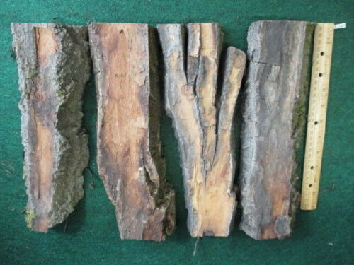 """4PC 4.5LB 1.6-2.2"""" THICK COTTONWOOD BARK CARVING Whittling WOOD CRAFTS-CB573"""