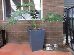 Large Pot with Plants for sale Joondalup Joondalup Area Preview