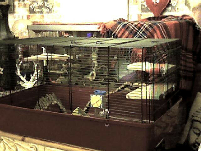XL RAT/HAMSTER CAGE [SOLD SUBJECT TO COLLECTION ]