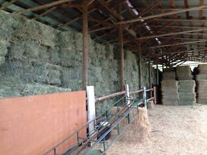 Quality Horse and Feeder Hay
