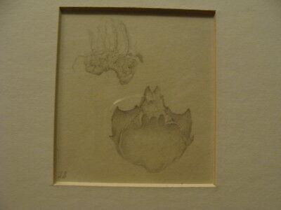 Vintage original LESLIE SNOW (Feron) Art -- SEA SHELL & CRAB SHELL pencil - 1949