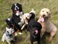 Group Dog Walks with Red Dog Pet Services! Registered & Insured!