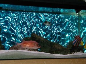 3d aqua lenticular fish tank backing looks amazing ebay for Fish stores in ma