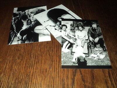 SHEILA LOT DE PHOTOS FORMAT 10*15 N&B - THEME 008 ANIMAUX - 3 PRISES