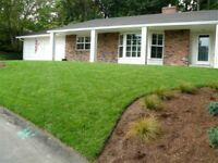 SOD KENTUCKY BLUEGRASS INSTALLED OR JUST DELIVER FRESH CUT LUSHs