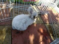 Angora Rabbit and Hutch £50ono