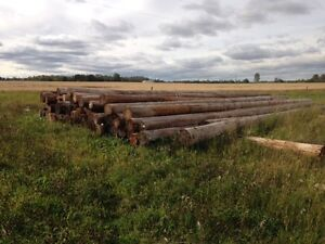 Power Poles and Fence Boards
