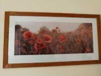 Red Poppy Framed Picture