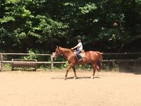 Winter Home needed for our 11 yr old 16 hand, Appendix Mare