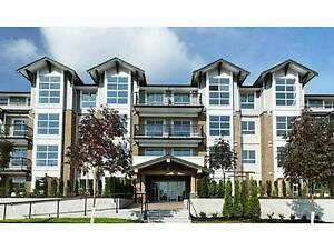 New 1 Bedroom Condo for rent, fully furnished (Coquitlam)