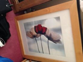 Picture - poppies