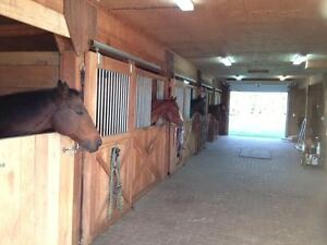Horse Boarding - 3 Stalls Available