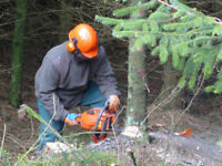 Professional Residential Tree Service 647 338-1505