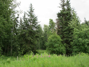 Build Your Dream Home Amongst the Mature Spruce Trees