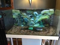 Tropical Aquarium Fish Tank, pump and stand