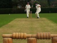 Cricket players wanted for friendly Sunday matches in Burgh Heath, Surrey