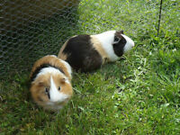 Small pets for boarding *** Sweet Pet Home***