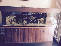 For sale is my beautiful 7x 2 x 2 sump fish tank.